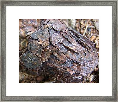 Rusted Rust Framed Print by Mary Deal