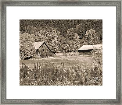 Rustic Beauty In Sepia Framed Print by Connie Fox