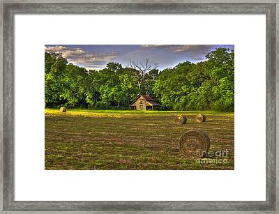 Rustic Beauty Oak Tree Round Bales Framed Print