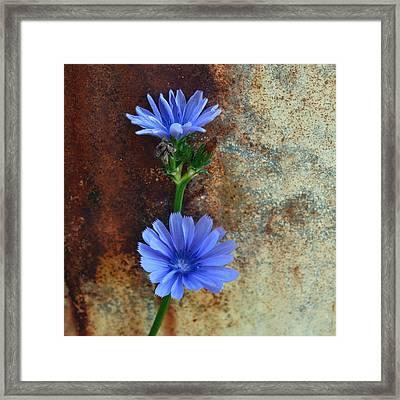 Rustic Bloom Framed Print by Tom Druin