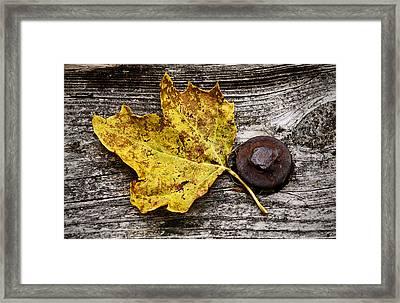 Rustic Leaf Framed Print