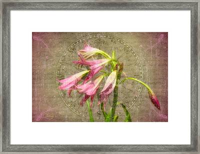 Rustic Lilies Framed Print by Larry Bishop