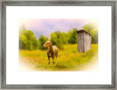 Rustic Pasture Framed Print by Mary Timman