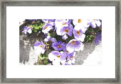 Rustic Planter Box Framed Print by Beverly Guilliams