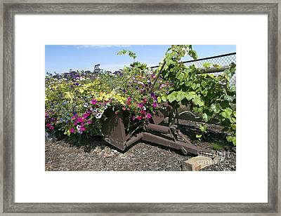 Rustic Planter Framed Print by Peter French