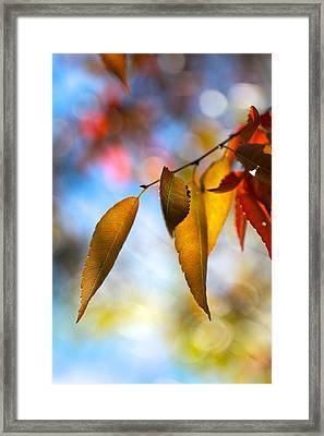 Rustling Leaves Framed Print by Tracy Male