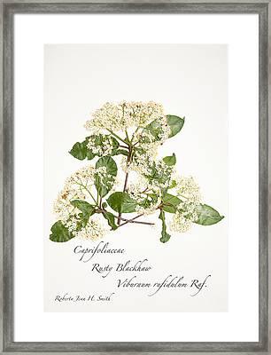 Rusty Blackhaw Framed Print