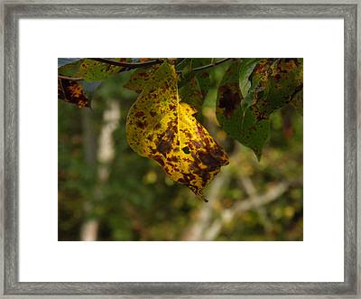 Framed Print featuring the photograph Rusty Leaf by Nick Kirby