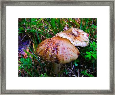 Rusty Mushroom Framed Print