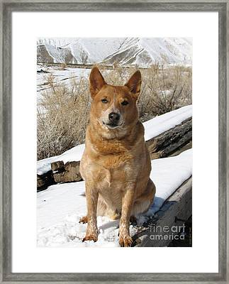 Rusty - Red Heeler Framed Print
