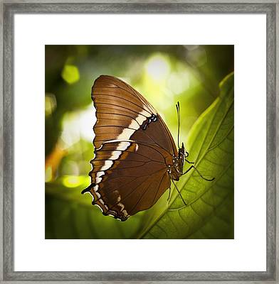 Rusty Tip Butterfly Framed Print by Bradley R Youngberg
