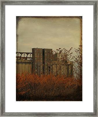 Rusty Weeds Framed Print