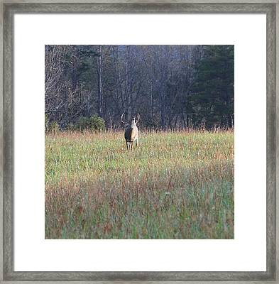 Rut Framed Print by Dan Sproul