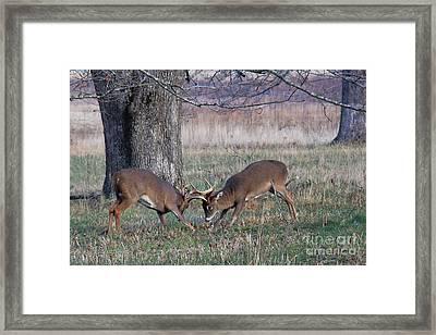Rut Season Framed Print by Leslie Kirk