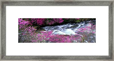 Ryuzu Falls Tochigi Japan Framed Print