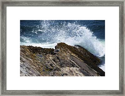 Seagull Sea Spray Framed Print