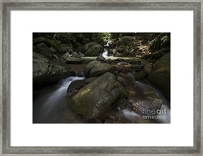 Framed Print featuring the photograph Sabah Nature by Gary Bridger