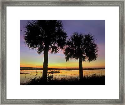 Sabal Palms At Saint Marks National Framed Print