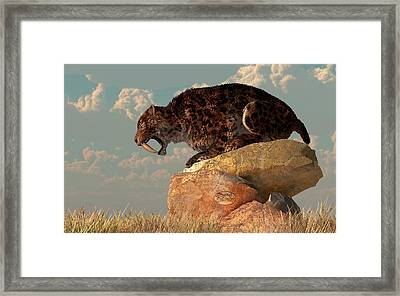 Saber-tooth On A Rock Framed Print by Daniel Eskridge