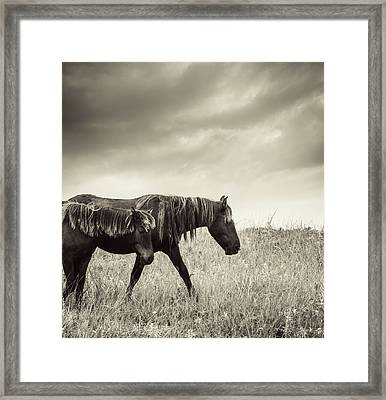 Sable Island Horses Framed Print by Jewelsy