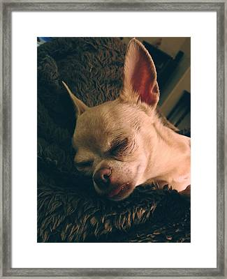 Sacked Out Framed Print by Laurie Search