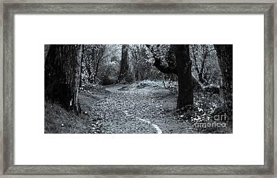 Sacramento River Walk At Turtle Bay Framed Print