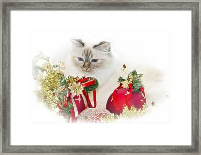 Sacred Cat Of Burma Christmas Time II Framed Print by Melanie Viola