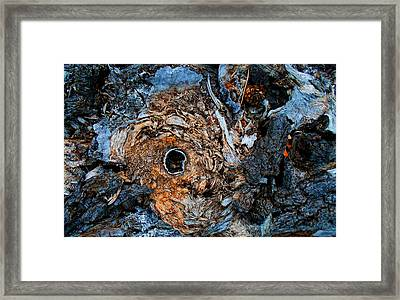 Sacred Circle Of Life Framed Print
