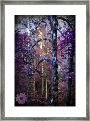 Sacred Forest Framed Print