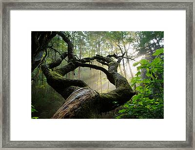 Sacred Forest Framed Print