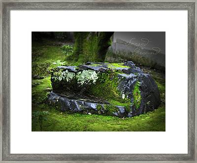 Sacred Ground Framed Print by Barbara Bitner