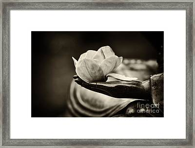 Sacred Hand  Framed Print by Tim Gainey