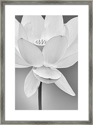 Sacred Lotus Blossom Bw Framed Print by Susan Candelario