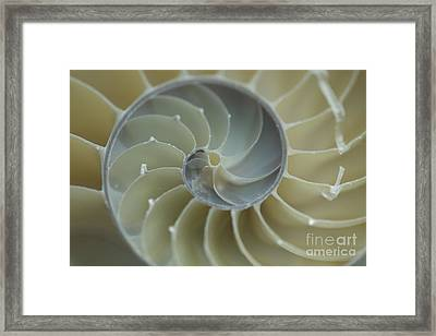 Sacred Spiral II Framed Print by Jeanette French