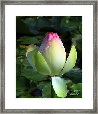 Sacred Tulip Lotus Framed Print by Patricia Januszkiewicz