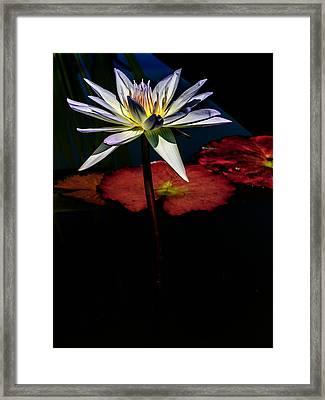 Sacred Water Lilies Framed Print by Louis Dallara