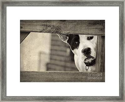Sad Eyes Framed Print by Darren Fisher