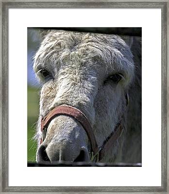 Sad Eyes Framed Print by John Holloway