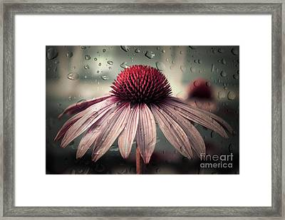 Sad Solitude Framed Print by Aimelle