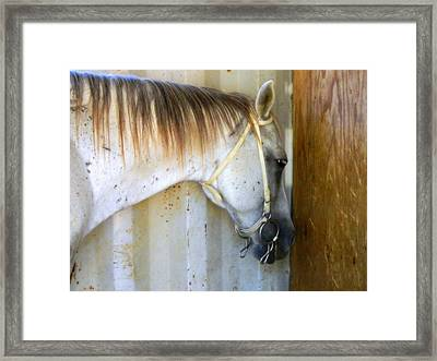 Saddle Break Framed Print by Kathy Barney