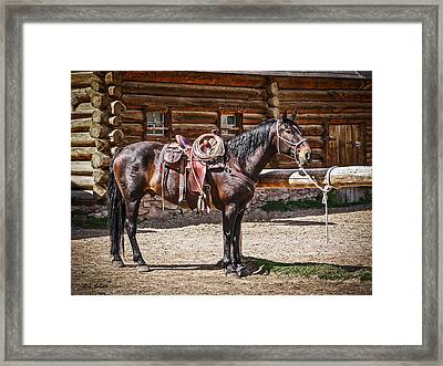 Saddled And Waiting Framed Print by Sue Smith