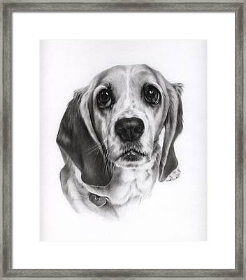 Framed Print featuring the drawing Sadie by Natasha Denger