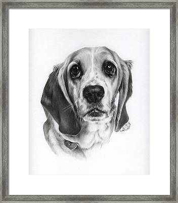 Sadie Framed Print by Natasha Denger