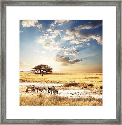 Safari Framed Print by Boon Mee