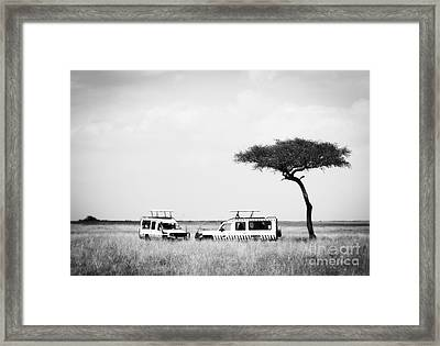 Safari Dream Framed Print by Chris Scroggins