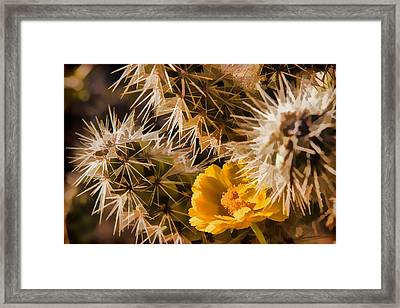 Safe Here Framed Print by Scott Campbell