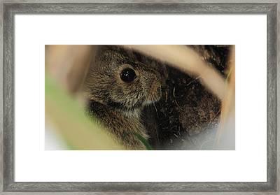 Safe Hiding Framed Print