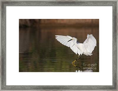 Safe Landing Framed Print by Ruth Jolly