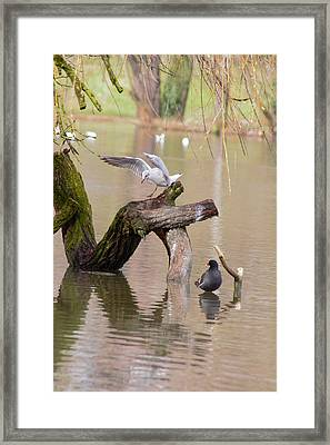 Safe Landing Framed Print by Theresa Selley