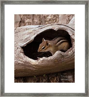 Safe Place Framed Print by Kathleen Struckle